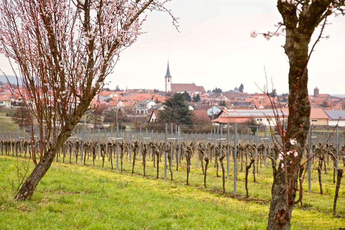Weinstrasse Pfalz 110