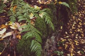 Ein zauberhafter Herbstwald.