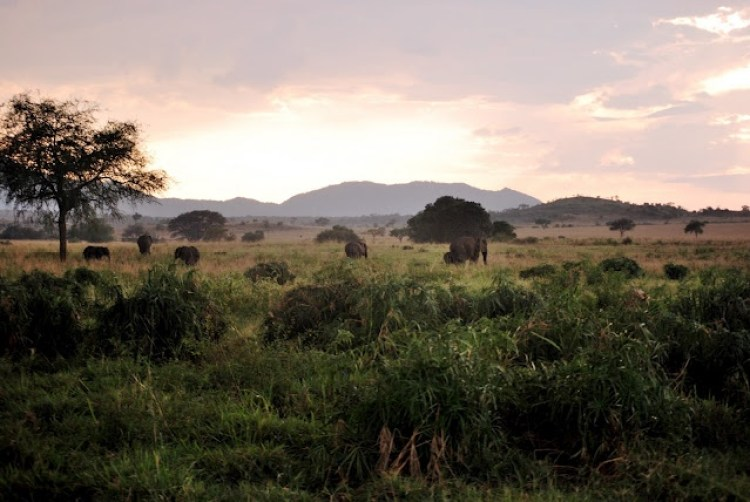 Kidepo Valley National Park, Uganda2
