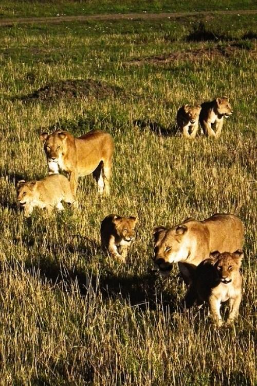Masai Mara National Reserve, Kenya2