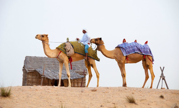 camel ridding