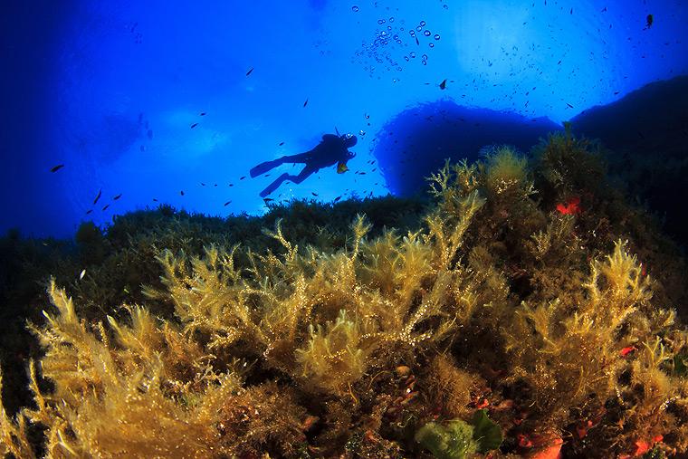Diving in Corfu