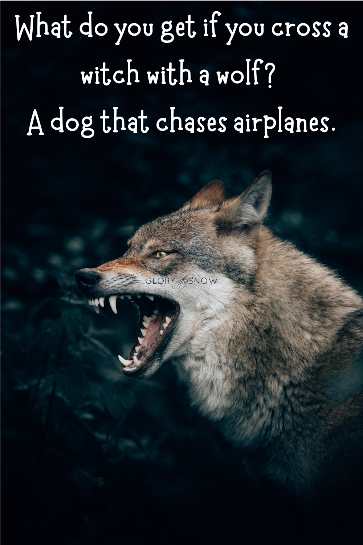 wolf puns
