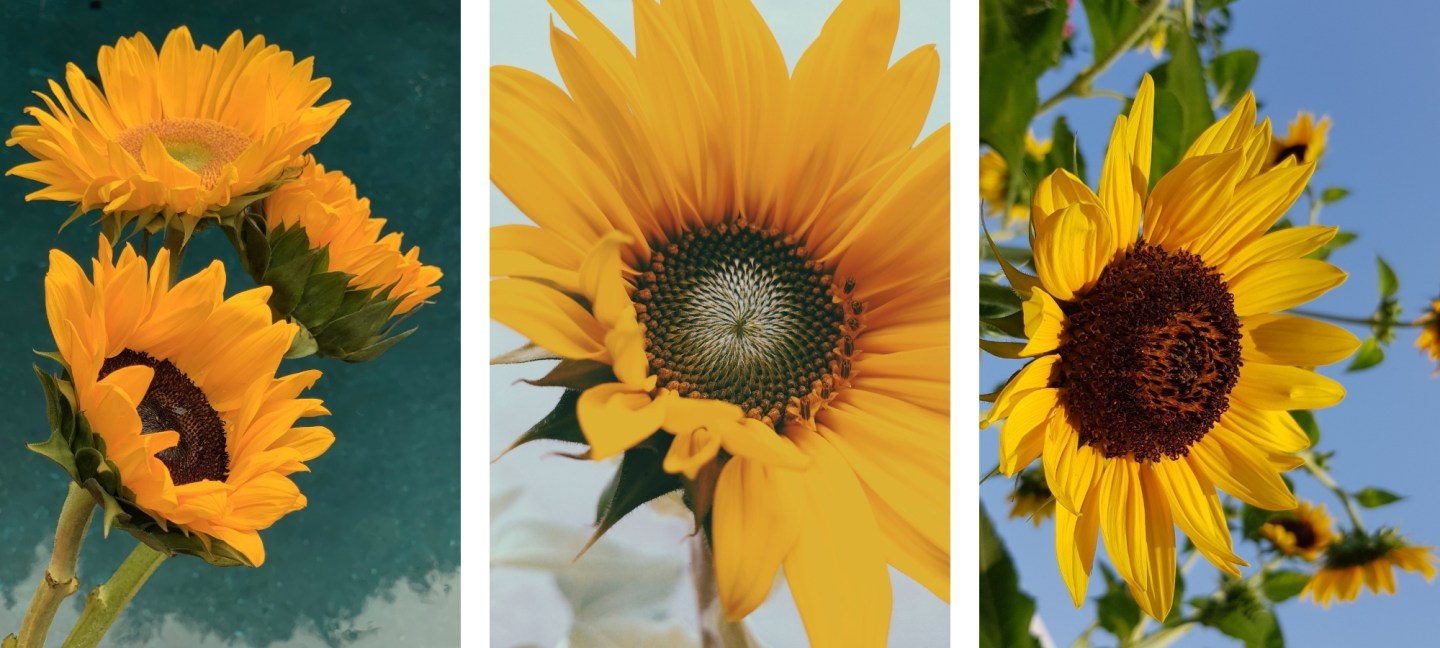 cute yellow asthetic sunflower wallpapers