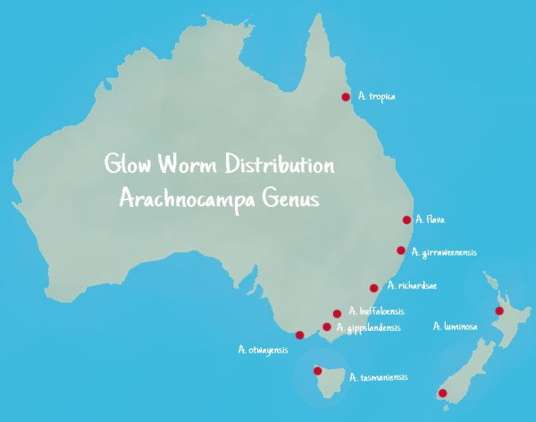 Learn More about Glow Worms Tamborine Mountain Gold Coast