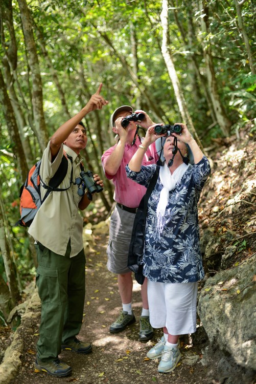 Bird watching in Belize.