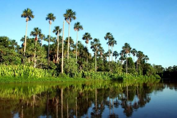 Pantanal in Brazil.