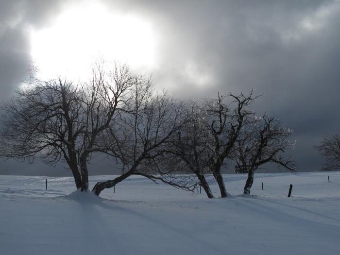 Von wegen unheimlich: Wenn die Sonne aus den Wolken kommt, bringt sie die vereisten Bäume zum Glitzern.
