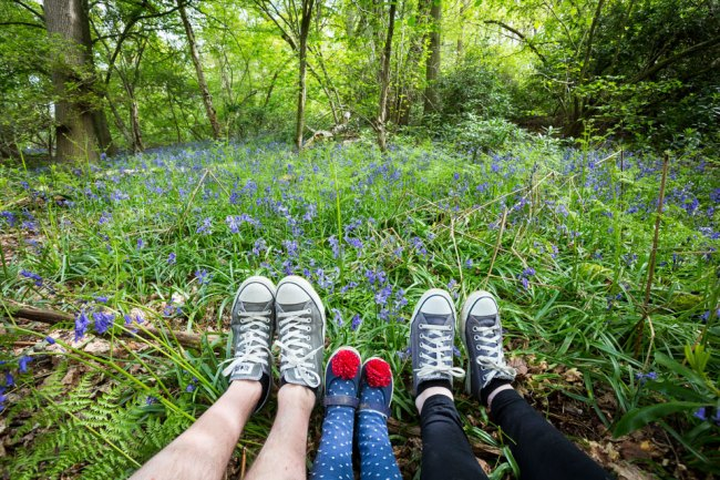 matilda_hatchlands_park_bluebells_little_wix_wood_384