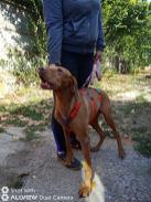 Reisende Hunde 18.09.2020-7