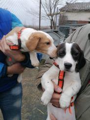 Cooper und Chanel