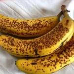 Banana Pecan Muffins 1