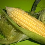 Creamed Corn1