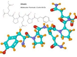 Gliaden Molecule Protein