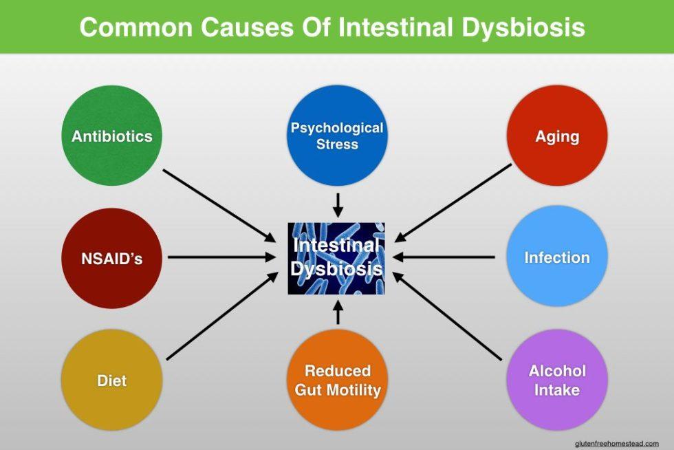 Dysbiosis7:3.001