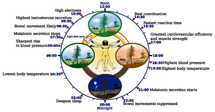 circadian_clock