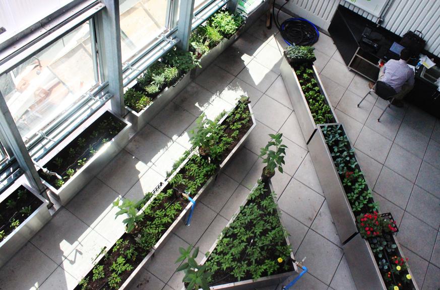 proj-greenhouse.006