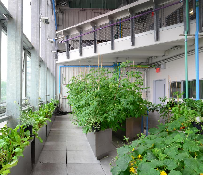 proj-greenhouse.007