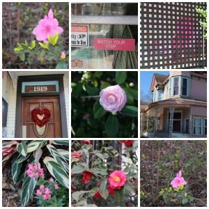 Pink in Savannah
