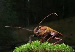 1187317_cockroach