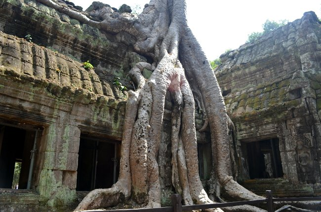 guided tour of angkor wat