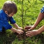 Geld besparen in je eigen tuin