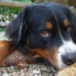 Mijn hond: mijn trouwste en beste vriend