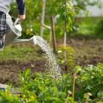 Hoe belangrijk is een kindvriendelijke tuin?