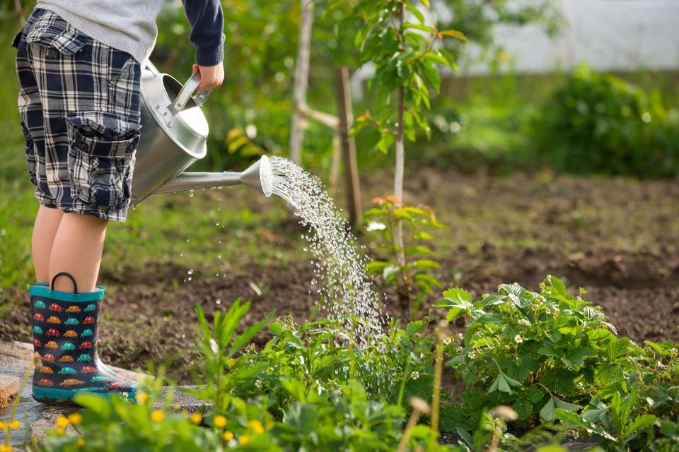 Hoe maak je een Kindvriendelijke tuin