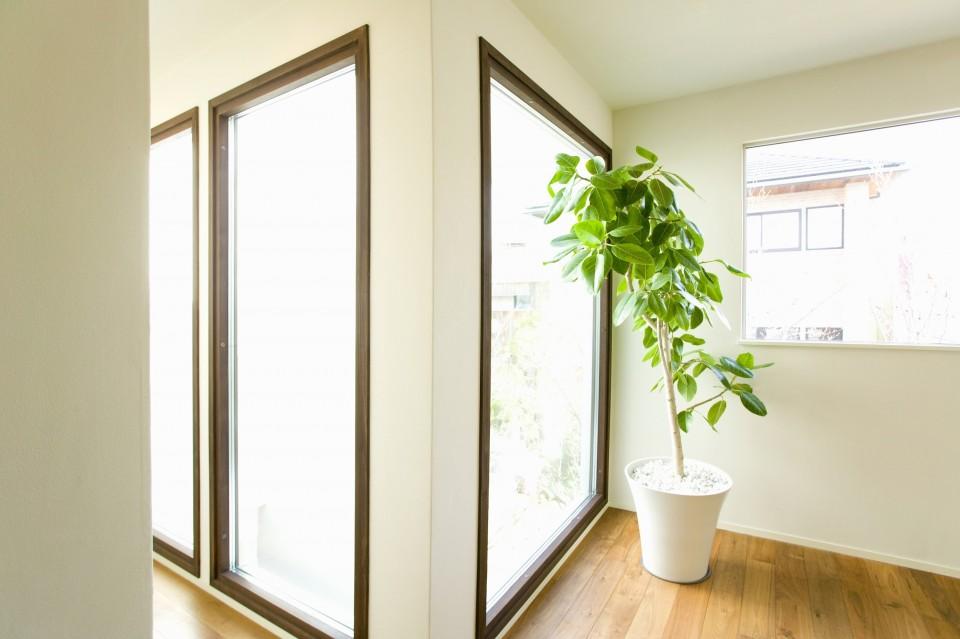 Kracht Planten Huis : Shazam je plant leer je planten kennen go or no go