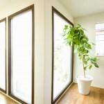 Shazam je plant: leer je planten kennen!