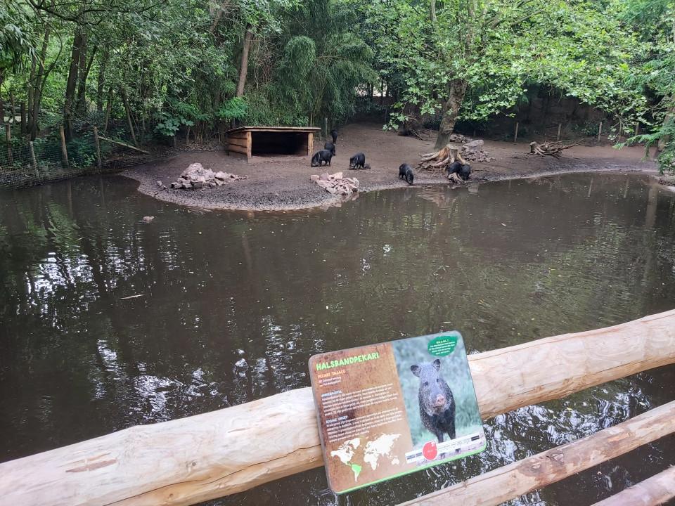 dierentuin brabant corona Op expeditie in Zooparc Overloon - Coronaproof!