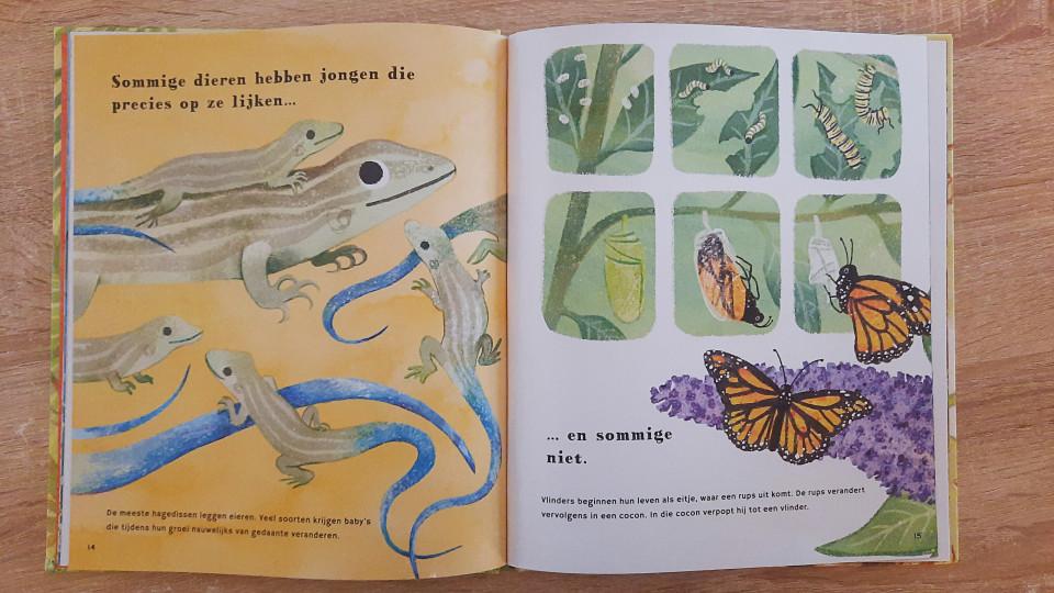 """Dieren hebben allerlei verschillende manieren om baby's groot te brengen. Dat laatste is exact waar het boek """"ontdek… dierenbaby's"""" over gaat."""