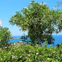 Villas Elektra Garden Sea view