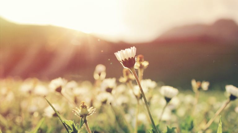 Budding flowers in a field
