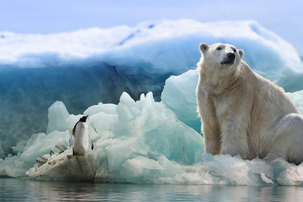 polar-bear-3277930_1920