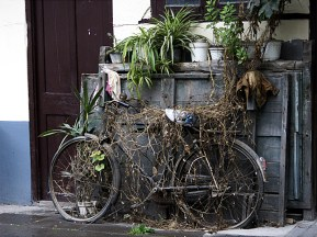 Discarded bike, China