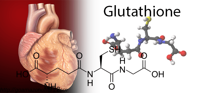 Glutathione Reduces Cardiovascular Disease Risk