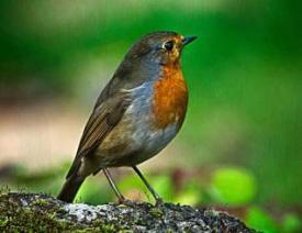 Salim_Ali_Bird_Sanctuary_goa