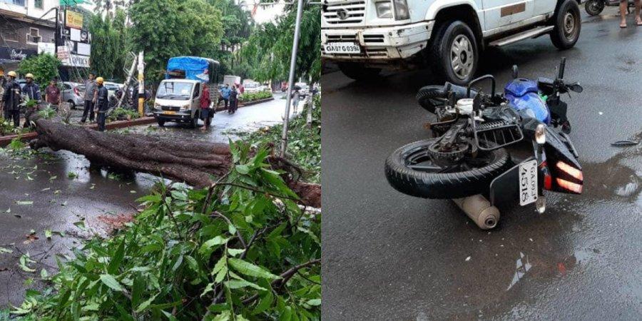 Tree Fall at Vasco Killed One