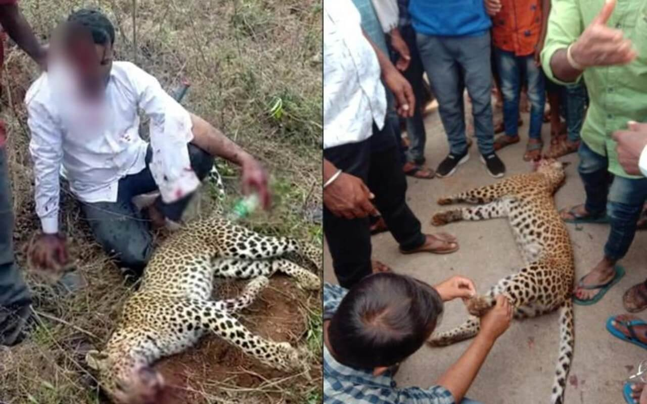 Man Strangles Leopard