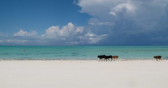 best places to visit in january zanzibar