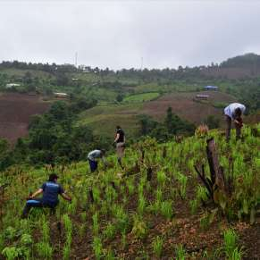 Volunteers have the opportunity to help on community projects as well daily work, such a rice farming