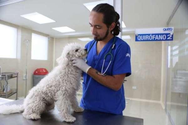 Vet checking a white dog in Ecuador