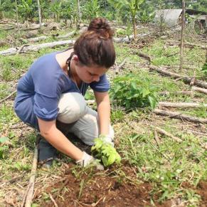 Volunteer planting small plants in Ecuador