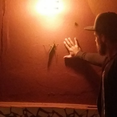 Volunteer comparing his hand to the size of a giant grasshopper on a wall