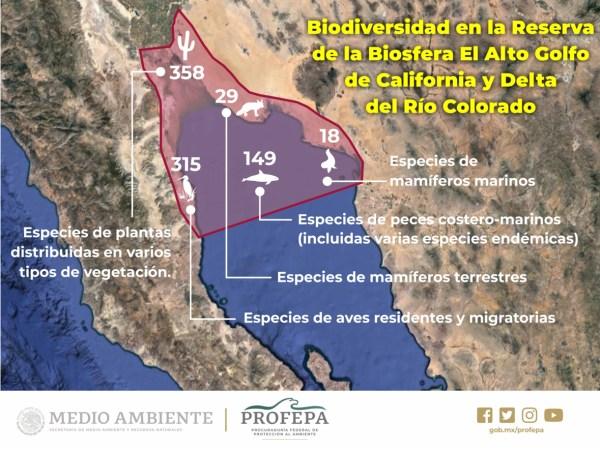 /cms/uploads/image/file/536273/MapaReserva_de_B_Alto_Golfo_Cal.2.jpg