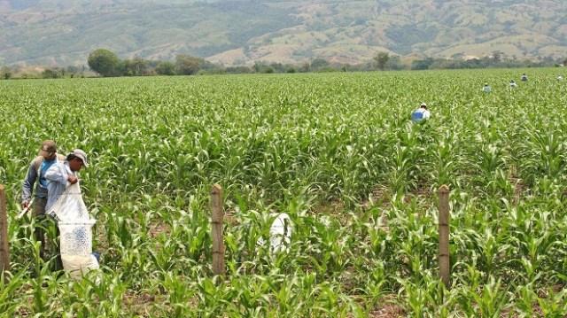 /cms/uploads/image/file/633662/campesinos.jpg