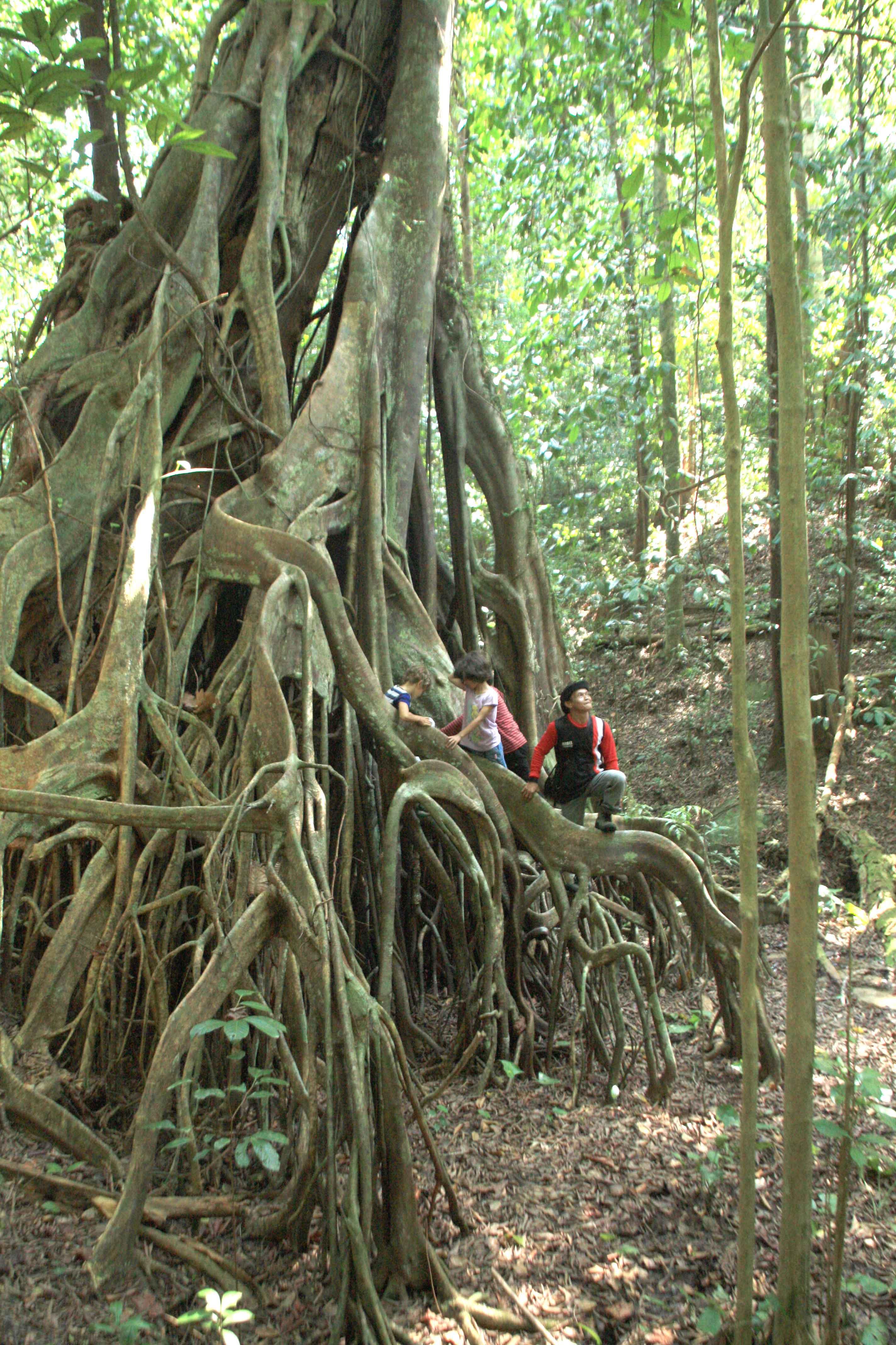 Bukit Peramun Air Selumar elitung gobelitung indonesia