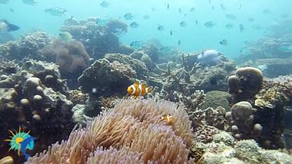 snorkling à Belitung Indonésie Go Belitung